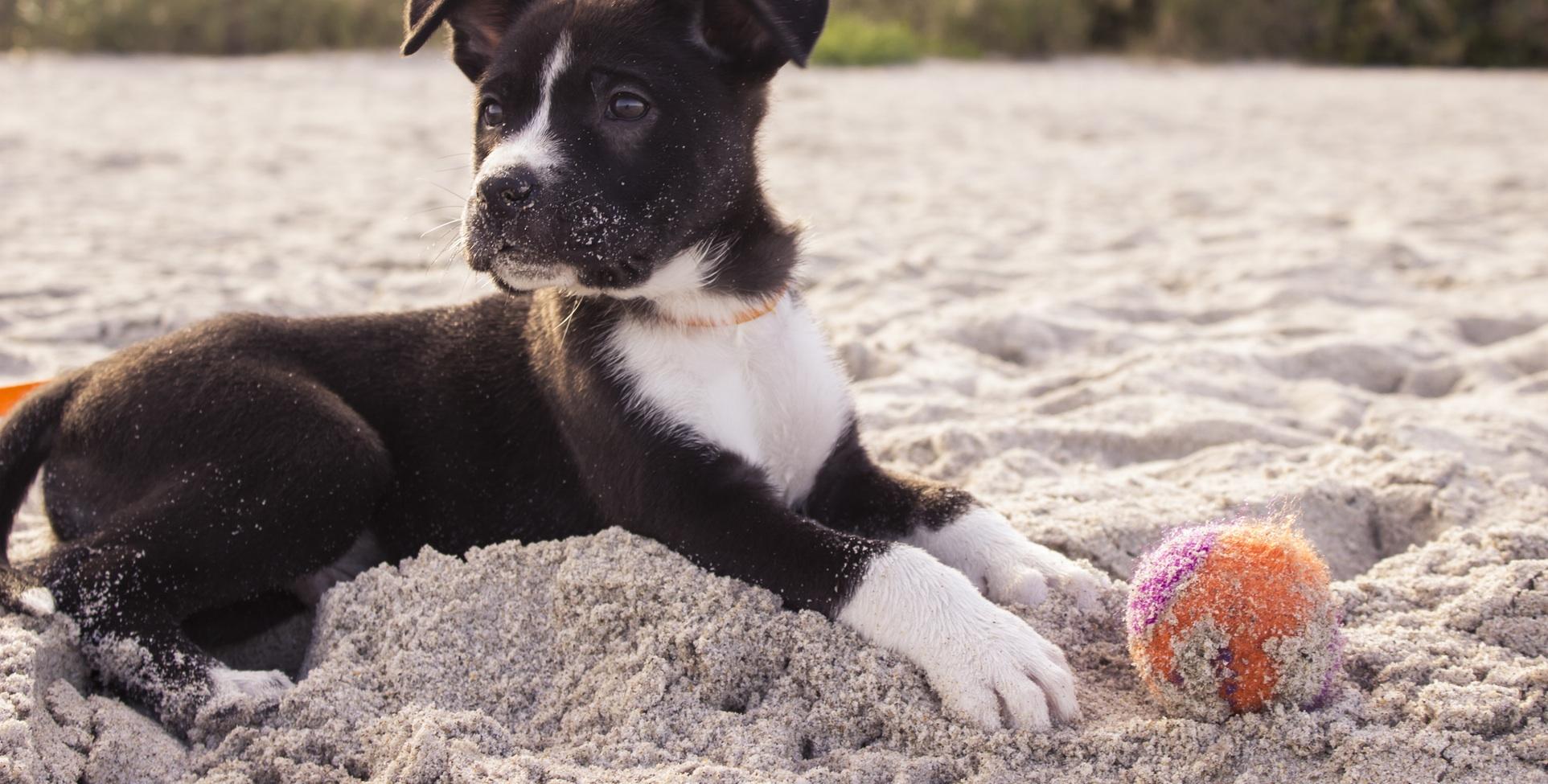 Beach Puppy Mix