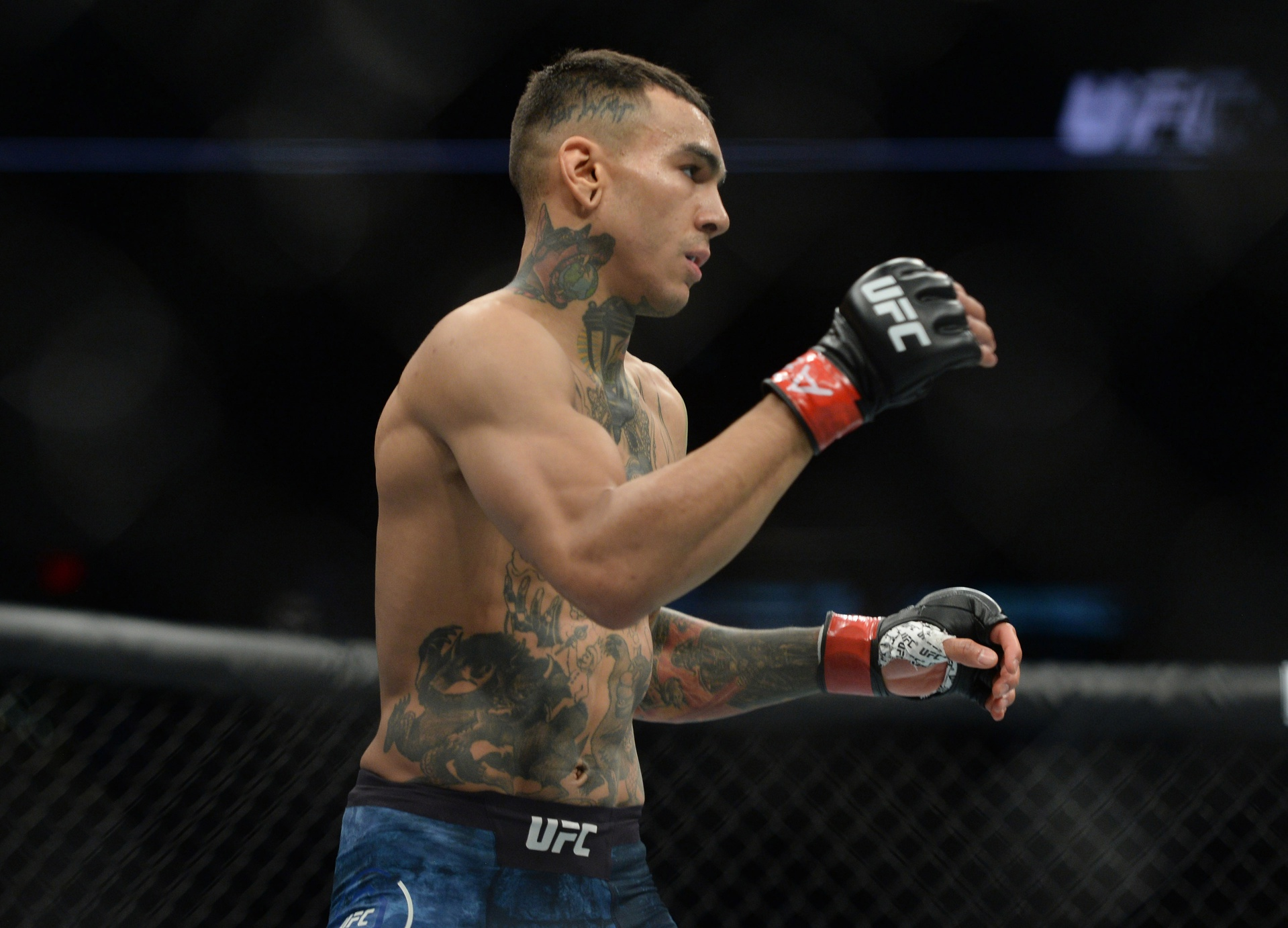 Andre Fili Career Earnings
