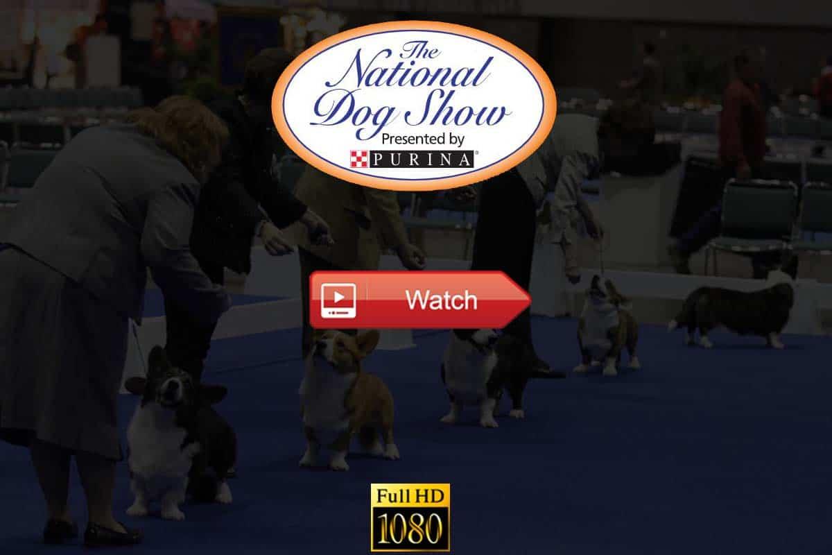 National Dog Show live stream reddit