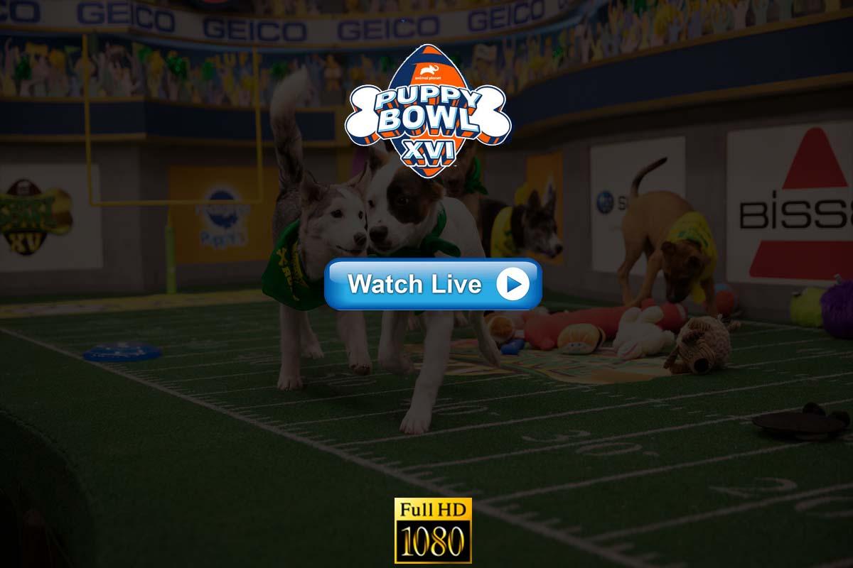 Puppy Bowl Live Streaming Reddit