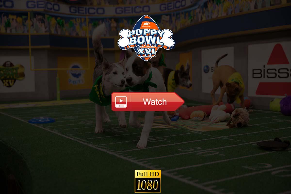 Puppy Bowl Live Stream Reddit