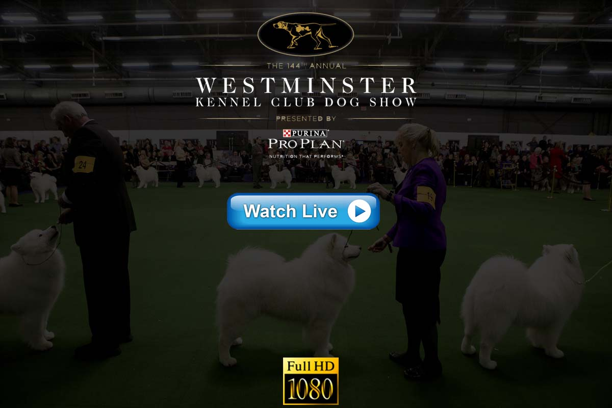 Westminster Kennel Club Dog Show live streaming