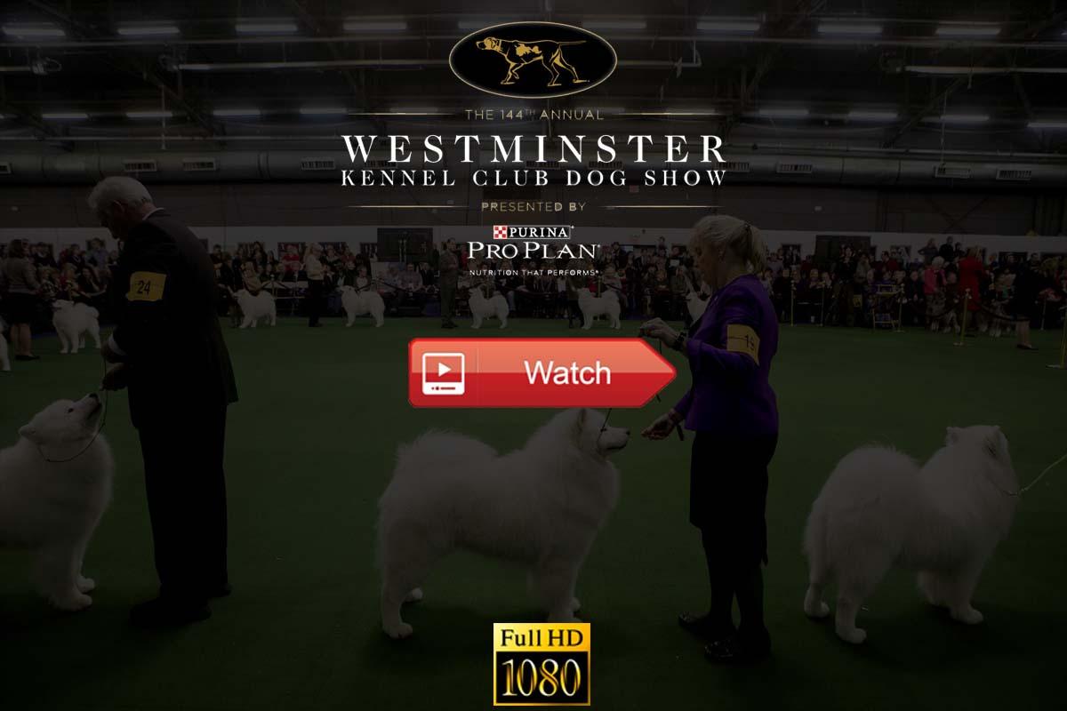 Westminster Kennel Club Dog Show live stream