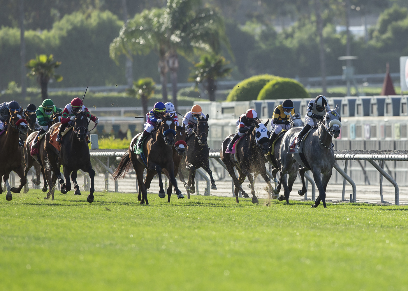 The Basics of Horse Racing: What you Need to Know