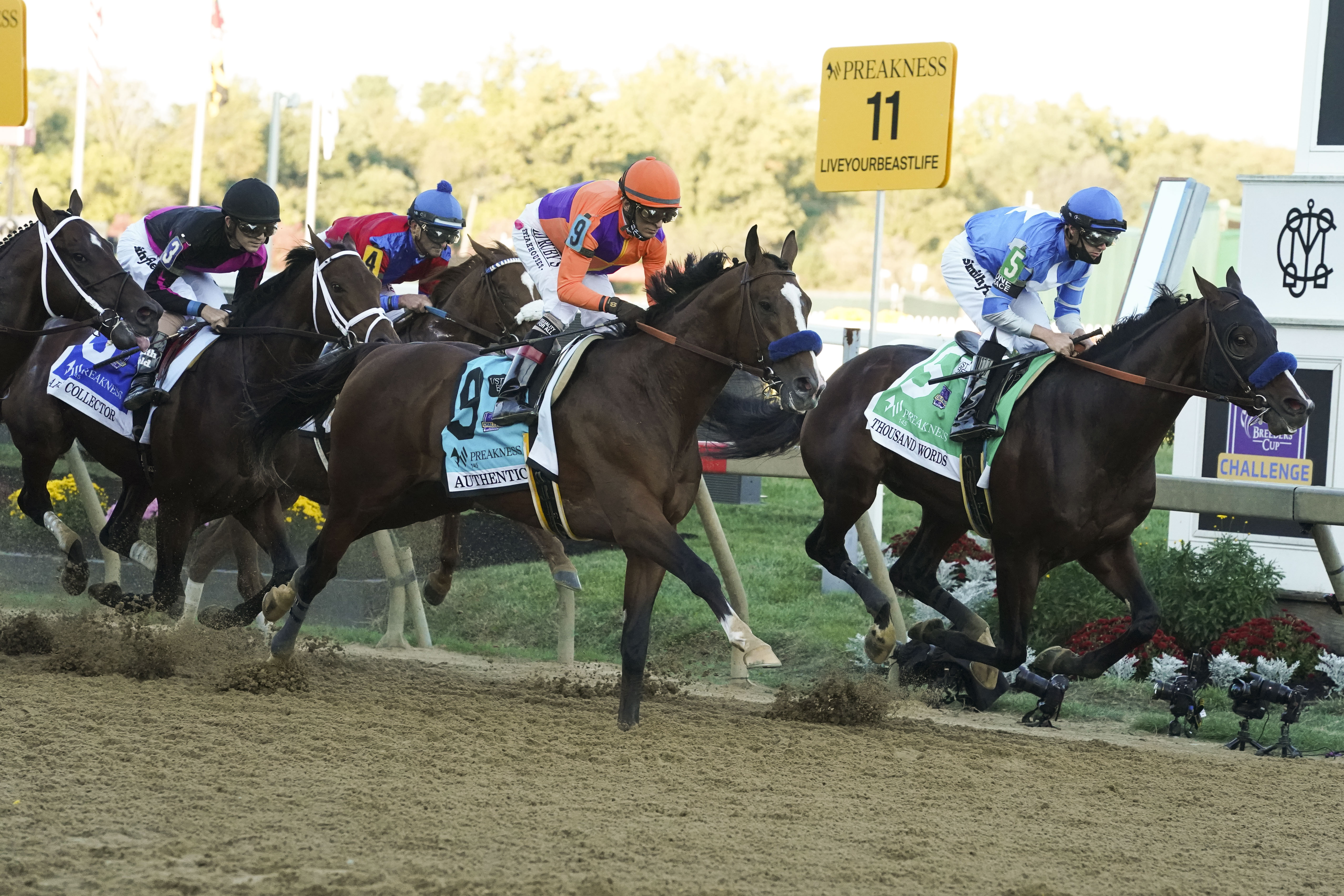 Horse Betting Sites: Factors to Consider while Choosing One