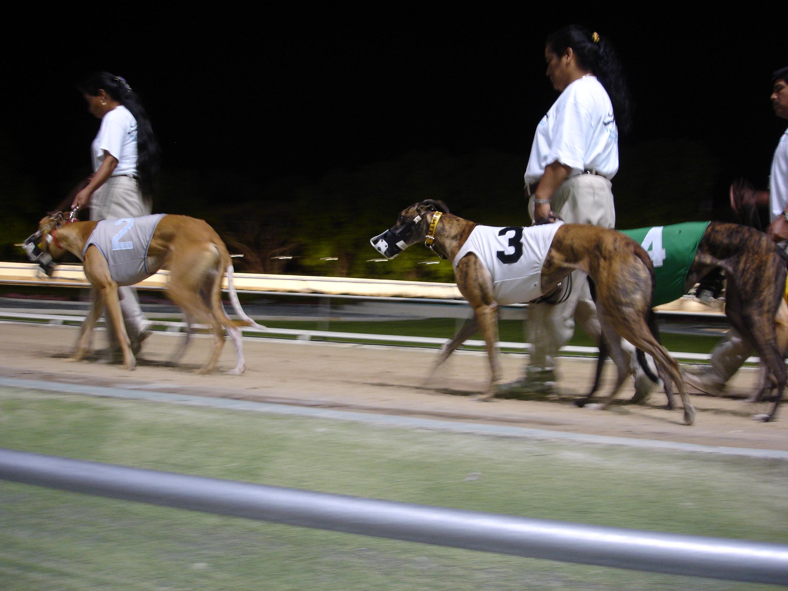 Greyhound Racing: Analysing the GBGB Awards nominations