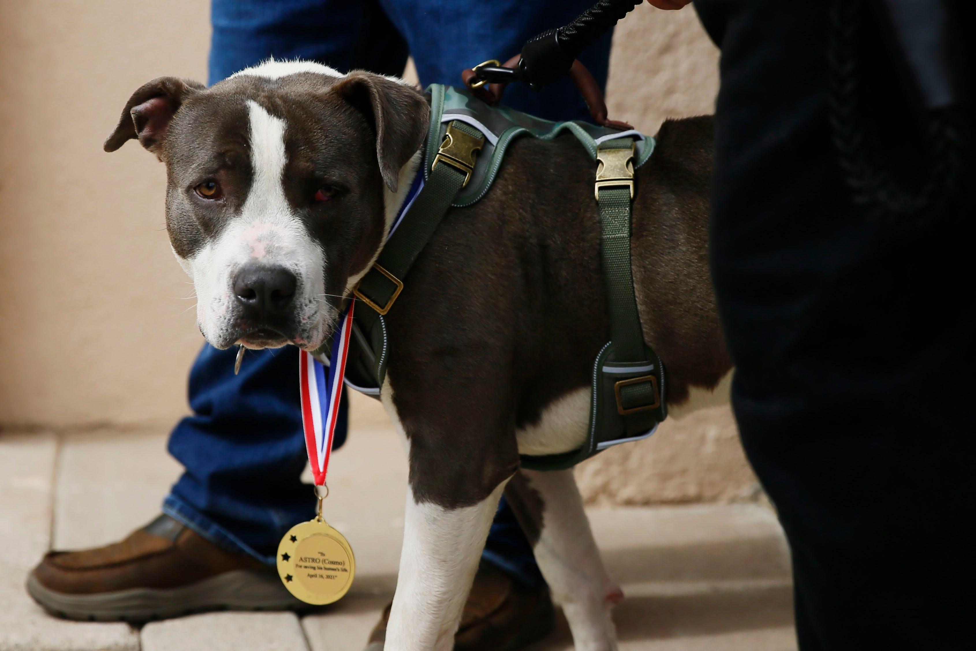 Top 10 Dog Sports