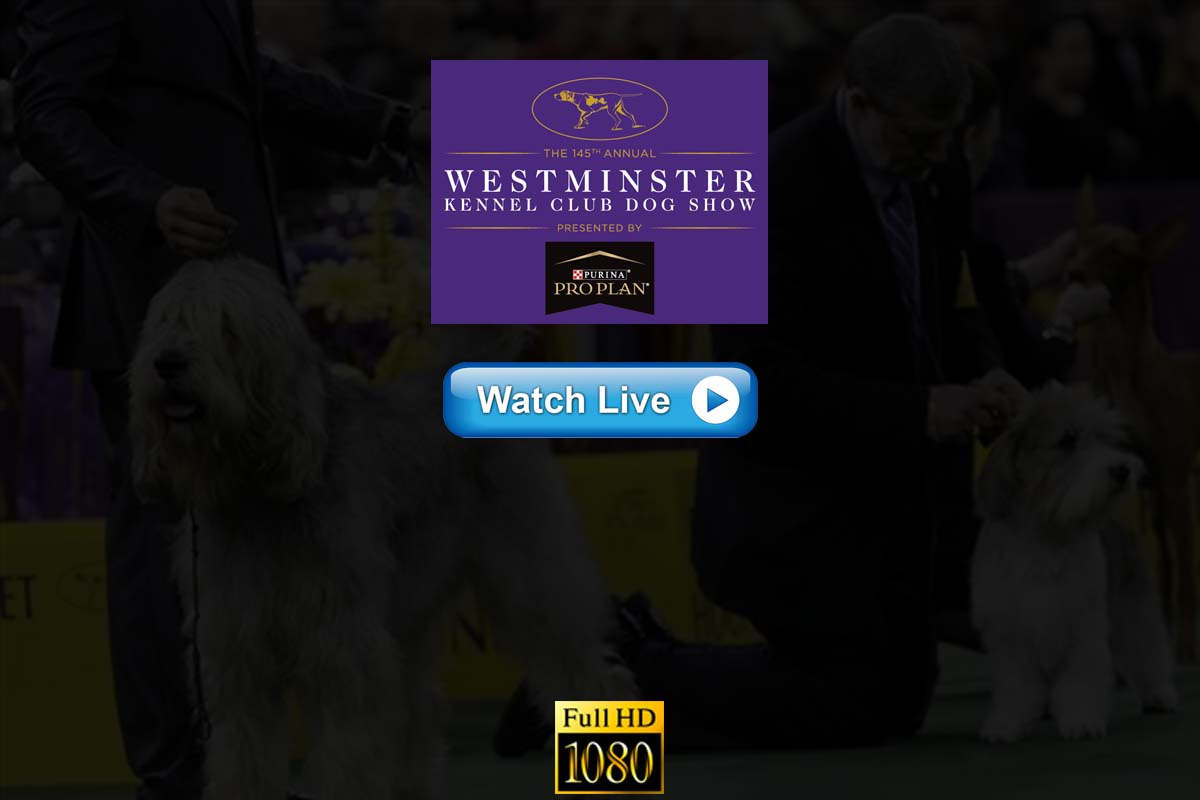 Hound!! Crackstreams Kennel Club Westminster Dog Show Live Streaming 2021 Reddit/Twiiter